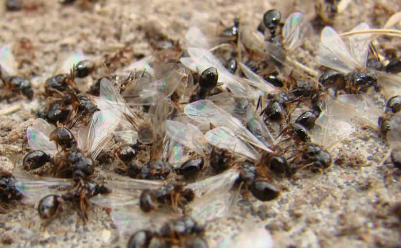 Should we care about insects?